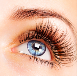 semi permanent mascara training course
